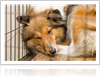 How Does Kennel Cough Affect Dogs